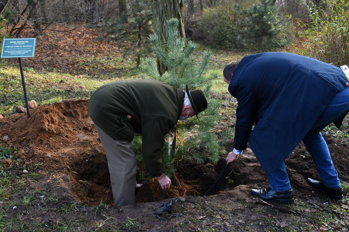W parku ks. Karola Wojtyły posadzono sosnę